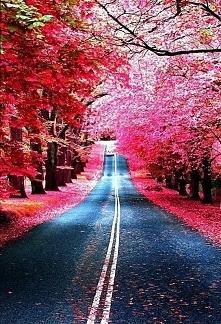 Przepiękna droga...