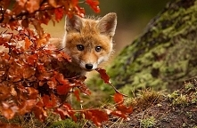 Jesień to czas przemijając...