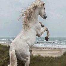 Piękno siła i wolność.