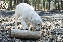 wyprawa do lasu