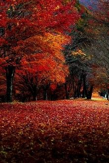Jesiennie :)