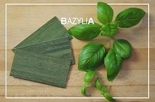 Charakterystyczna BAZYLIA - Żaluzje Bambusowe. Domowe Pielesze - Udekoruj swó...