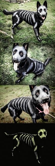 """""""costume"""""""