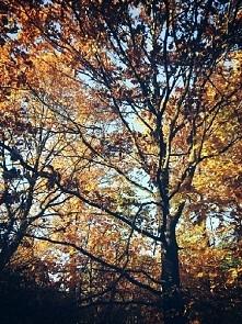 piękna jesień :D