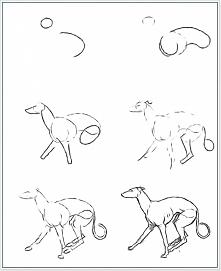 Jak narysować psa :3