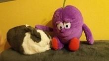 dobry królik...dobry :D