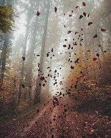 Uroki jesieni...