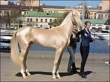 Ten koń został uznany za najpiękniejszego na świecie. Każdy miłośnik tych zwi...