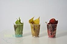 Eksperyment, z którego dowiecie się - dlaczego liście zmieniają kolory.
