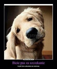 Bicie psa za szczekanie...