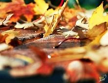 Jesień - fotografia kolorow...