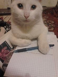 Chyba mój kot polubił naukę biologii. Może zda za mnie maturę? :D