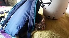 Kotek nie zgadza się żebym szła na trening. :)