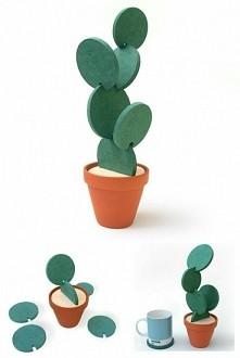 cudny kaktus z podkładek