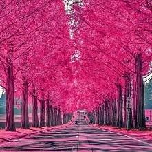 Shiga- Japan