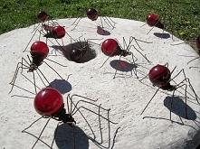 czerwone pająki