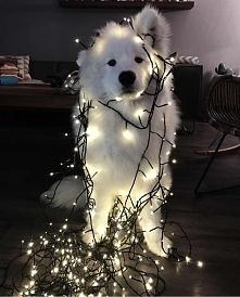 Świątecznie! :D