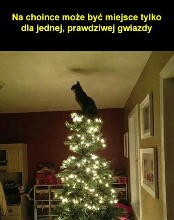 Ach Te Koty 3 Na Zwierzęta Zszywkapl