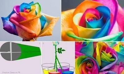 Kolorowa róża - diy.