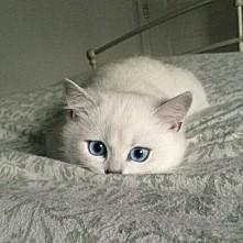 Kotek.