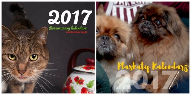Pomóż pieskom i kotkom z Plaskatego Azylu i kup kalendarz:)))