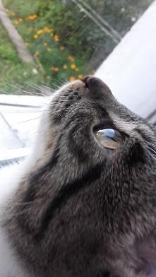 Mój kociaczek ♡♡♡