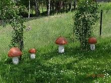 Grzyby ogrodowe