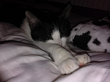 Kot zimą - czyli z czym to się je ;) nowy post, zapraszam! (klik)