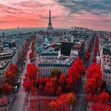 París, Francia Photo by kardinalmelon