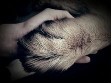 """""""Pies jest jedynym stworzeniem na ziemi, któremu możesz zaufać"""""""