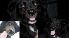 """#pies #Konkurs #bylsobiepies """"On jest twoim przyjacielem twoim partnerem..."""