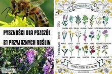 Co kochają pszczoły. Czyli co zrobić aby mieć lepsze plony w sadzie i warzywn...