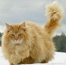 grube rude kocisko