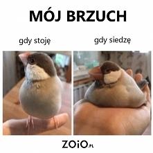 Gruba ja! / ZOiO