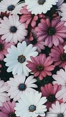 Kwiatki..