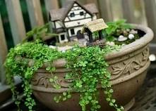 Domek wiejski w doniczce. *-* swietny pomysl na wlasny mini ogródek!