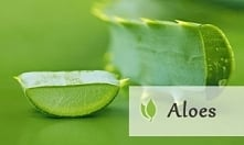 aloes - kilka ciekawych informacji
