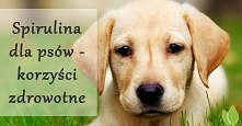 spirulina dla psów - jakie korzyści daje?