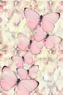 Motylki <3