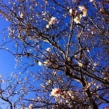 wiosna już tuż tuż