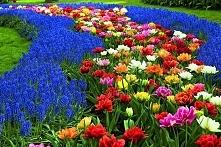 Wiosna w ogrodzie. Jest coraz cieplej, dni stają się dłuższe. Słychać już śpi...