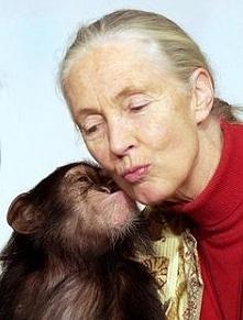 Najważniejsze, żeby robić to, co się prawdziwie kocha. Tak, jak zrobiła to Jane Goodall, która przez 30 lat prowadziła obserwacje szympansów w ich naturalnym środowisku, w sercu...