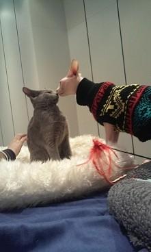 ~wystawa kotów  ~Częstochow...