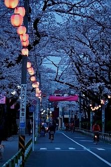 Japonia ♥