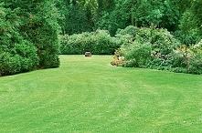 Trawnik. Choroby i szkodniki trawnika