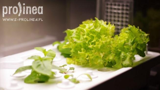 Domowa uprawa warzyw i ziół nigdy nie była prostsza!! Kliknij w zdjęcie i zgarnij RABAT na zakup szklarni greenfarm :)
