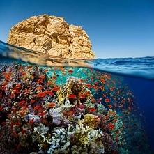 Morze Czerwone - Egipt :)