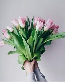 uwielbiam tulipany ♡