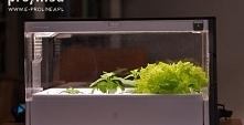 Domowa uprawa warzyw i ziół...