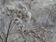 zapraszam na bloga, gdzie pokazuję moje najlepsze zdjęcia minionej zimy :) (k...